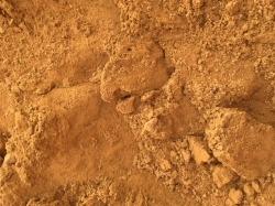 Brickworth Building sand